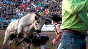 bull-riding-rodeo-buckin-ohio