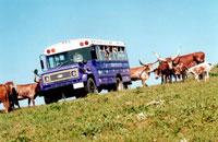 longhorn-tours