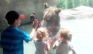 akron-zoo-grizzly-bears