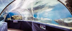 cleveland-aquarium