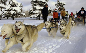 punderson-sled-dog-race