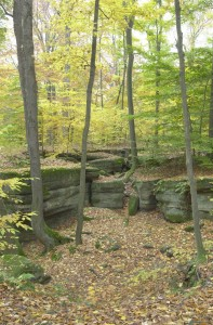 sp NELSON KENNEDY LEDGES