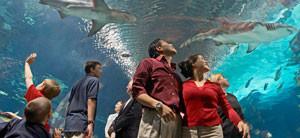 newport-aquarium-sharks