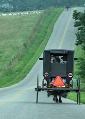 amish-buggies