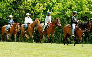 stark-parks-horseback-riding