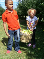 Picking Apples Marion Ohio