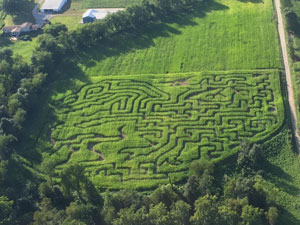 Ohio mazes are amazing!