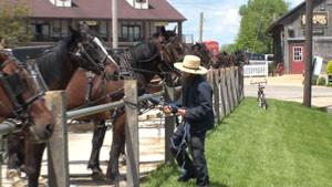 amish-man-amish-horse-amish-buggy