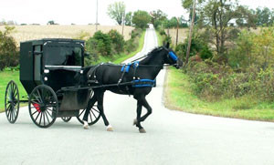 amish-horse-buggy-ohio