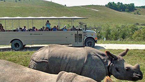Safari In Ohio >> Safari In Ohio At The Wilds Ohio Traveler